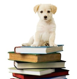 labrador puppies are like writing