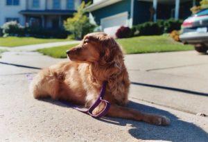 Does a dog make the neighborhood?