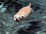 casey pool