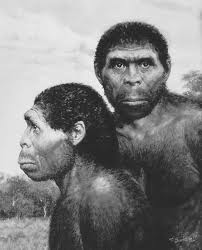 Homo erectus--searching for Lucy and Raza