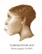 Nariokotome_Boy_Reconstruction