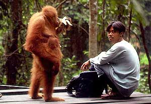 Orang_utan_and_man