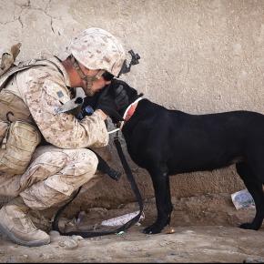 Veterans, I SaluteYou