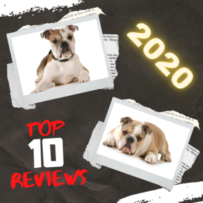 Top 2020 Book Reviews (and #Goodreads rundown)